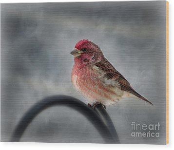Wood Print featuring the photograph Purple Finch by Brenda Bostic