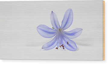 Purple Flower Wood Print by Cecil Fuselier