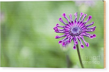 Purple Flower Wood Print by Serene Maisey