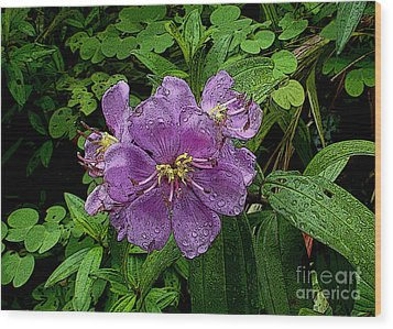 Wood Print featuring the photograph Purple Flower by Sergey Lukashin