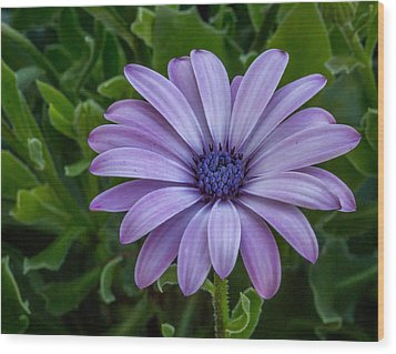 Wood Print featuring the photograph Purple Flower  by Trace Kittrell