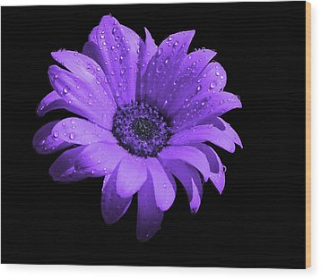Purple Flower With Rain Wood Print by Bruce Nutting