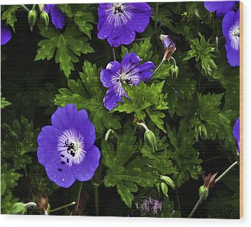 Wood Print featuring the photograph Purple Flower01 by Timothy Latta