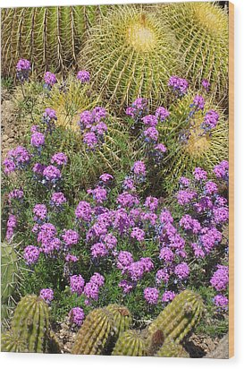 Purple Flowers And Barrel Cacti Wood Print by Mark Barclay