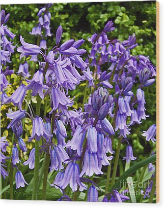 Wood Print featuring the photograph Purple Flowers by Gena Weiser