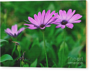 Wood Print featuring the photograph Purple Flowers by Joe  Ng