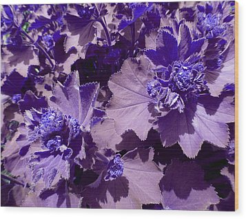 Wood Print featuring the photograph Purple Flowers by Laurie Tsemak