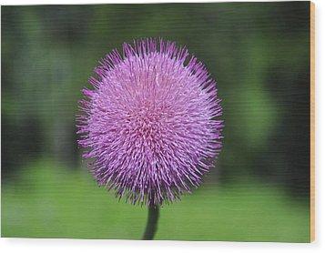 Purple Fuzz Wood Print by Richard Gehlbach