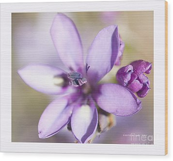 Purple Geranium 2 Wood Print by Artist and Photographer Laura Wrede