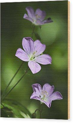 Purple Geranium Flowers Wood Print by Christina Rollo