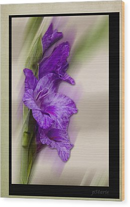 Purple Gladiolus Wood Print