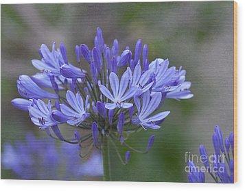 Purple Glory Wood Print by Kay Pickens
