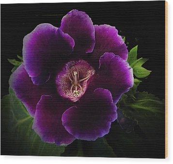 Purple Gloxinia   Wood Print by Judy  Johnson