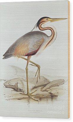Purple Heron Wood Print by Edward Lear
