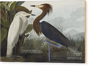 Purple Heron Wood Print