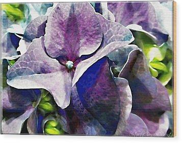 Purple Hydrangea  Flower Wood Print by Danielle  Parent