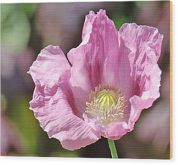 Purple Iceland Poppy Wood Print by Suzanne Gaff