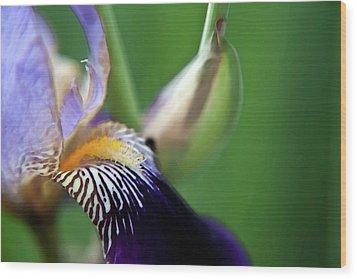 Purple Iris 2 Wood Print by Theresa Tahara