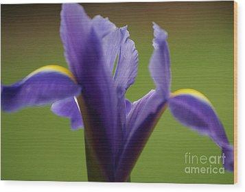 Purple Iris 7 Wood Print by Carol Lynch
