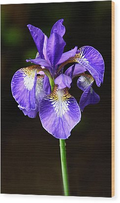 Purple Iris Wood Print by Adam Romanowicz