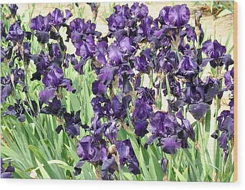Wood Print featuring the photograph Purple Iris by Diane Lent