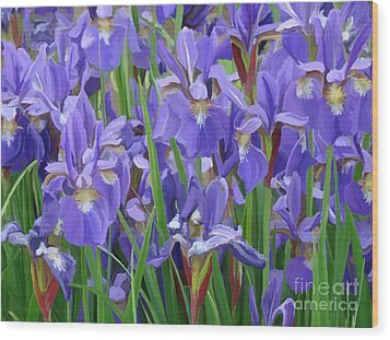 Wood Print featuring the painting Purple Iris Garden by Tim Gilliland