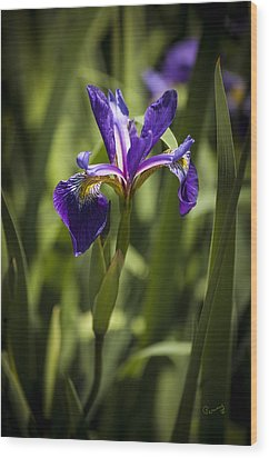 Wood Print featuring the photograph Purple Iris by Penny Lisowski