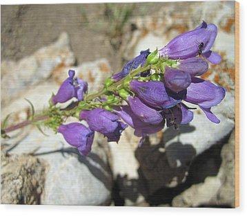 Purple Joy Wood Print by Mike Podhorzer