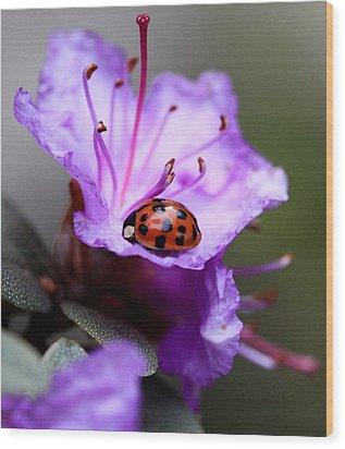 Purple Lady Wood Print by Aaron Aldrich