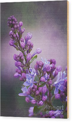Purple Lilacs Wood Print by Bianca Nadeau