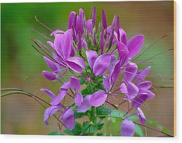 Wood Print featuring the photograph Purple Lilly by Jodi Terracina