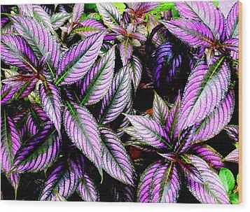 'purple' Wood Print