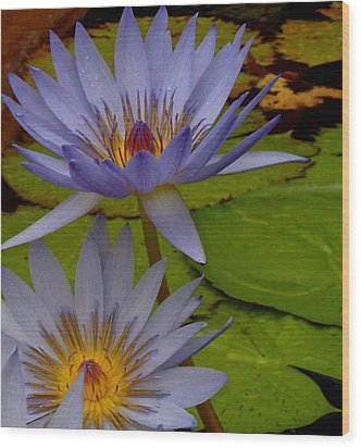 Lotus I Wood Print by Kim Pippinger