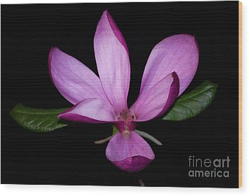 Purple Magnolia Wood Print by Nancy Bradley