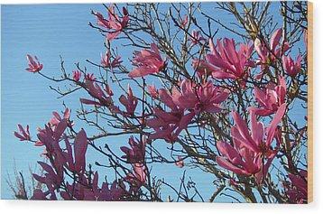 Purple Magnolias Wood Print
