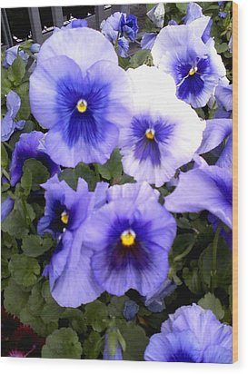 Wood Print featuring the photograph Purple Morning Glory by Fortunate Findings Shirley Dickerson