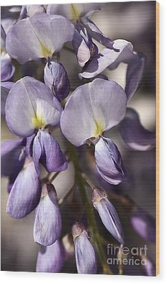 Wood Print featuring the photograph Purple Of Wisteria by Joy Watson