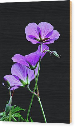Purple On Black Wood Print
