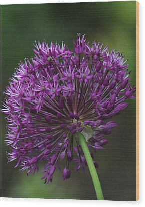 Wood Print featuring the photograph Purple Onion by Bill Woodstock