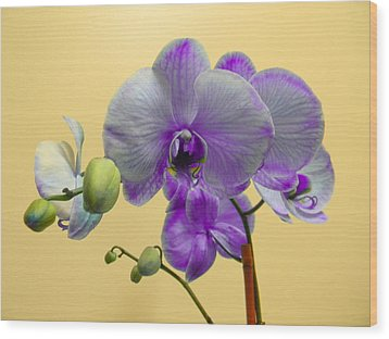 Purple Orchid Wood Print by Christy Usilton