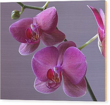 Purple Orchid Wood Print by Kathy Eickenberg