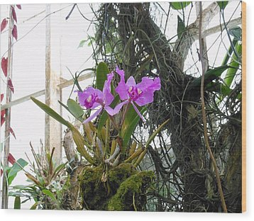 Purple Orchid Wood Print by Kay Gilley