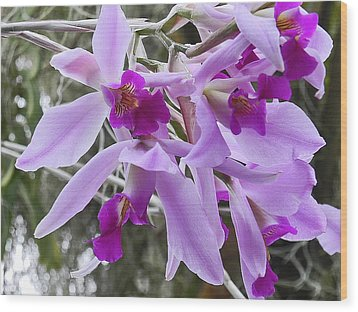 Purple Orchid Personality Wood Print
