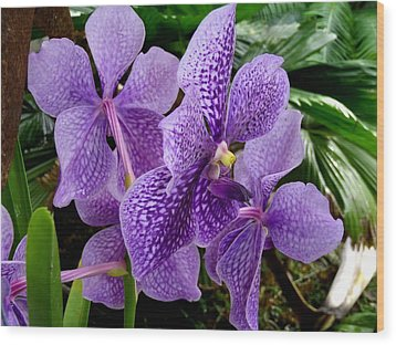 Purple Orchids Wood Print by Carey Chen