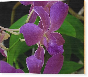 Wood Print featuring the photograph Purple Over Green by Greg Allore