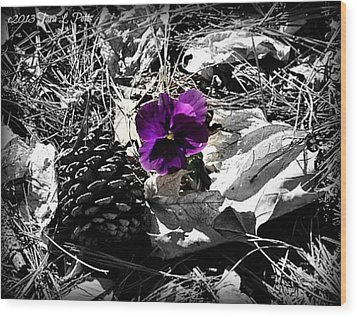 Wood Print featuring the photograph Purple Pansy by Tara Potts