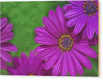 Purple Passion Wood Print by Joan Herwig