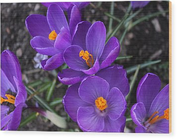 Wood Print featuring the photograph Purple Passion by Judy Palkimas