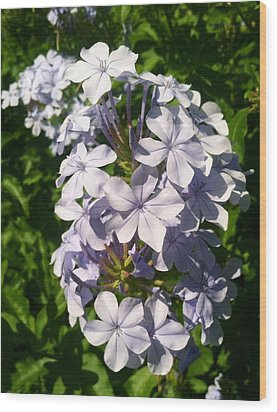 Wood Print featuring the photograph Purple Petals by Alohi Fujimoto