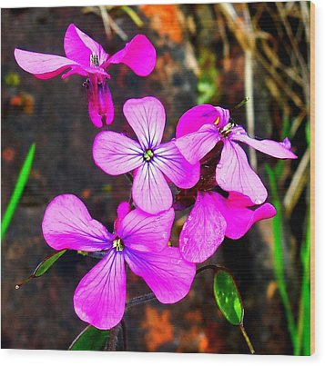 Purple Lunaria Wood Print by Karen Molenaar Terrell